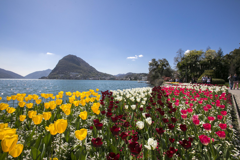 Ferienwohnung Laguna di Lugano (2464693), Pazzallo, Lago di Lugano (CH), Tessin, Schweiz, Bild 23